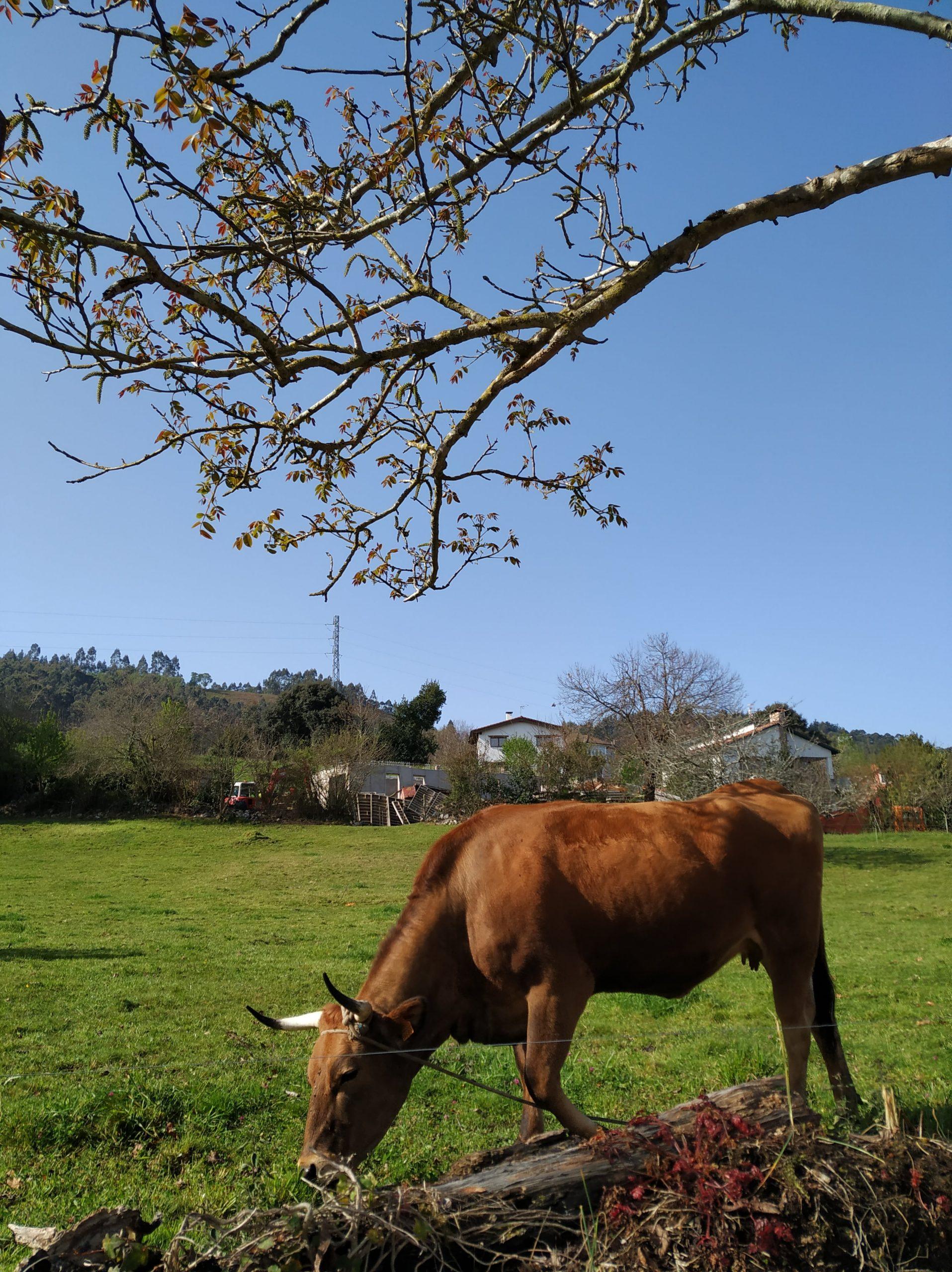 ruta-por-el-cantabrico-Villahormes-Asturias